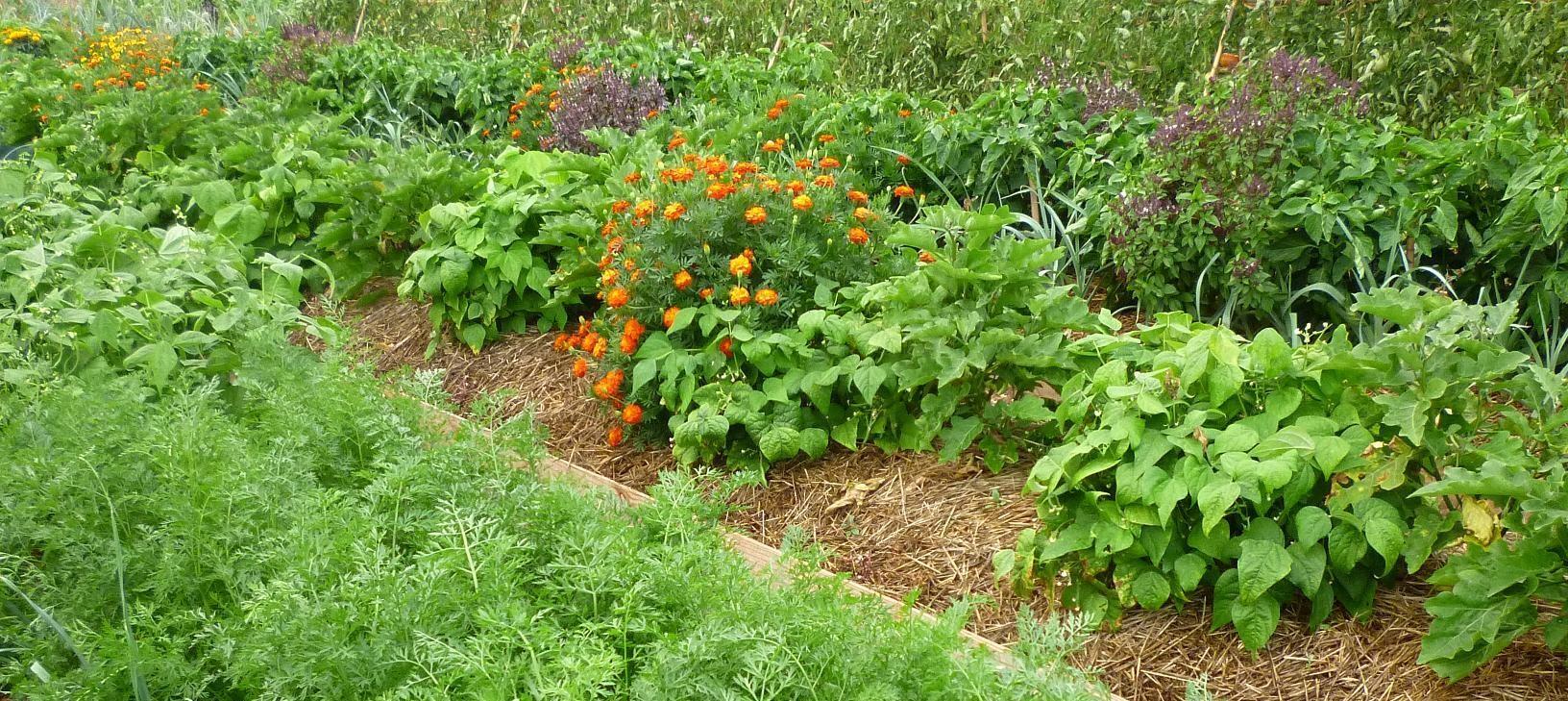 Huerta-Jardín del Boticario